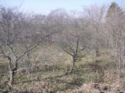 20010416-3.jpg