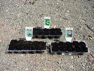 20020420-2.jpg