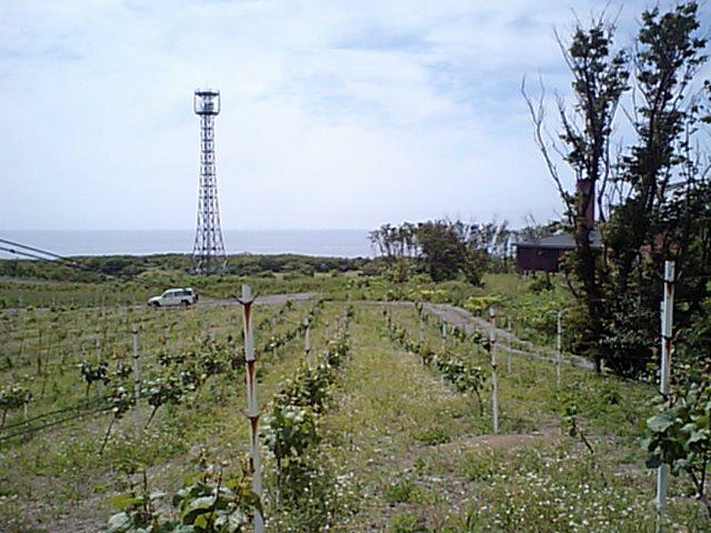 20080625-1.jpg