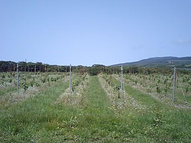 20080628-1.jpg