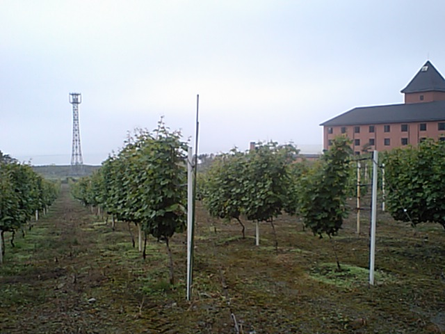 20080724-1.jpg