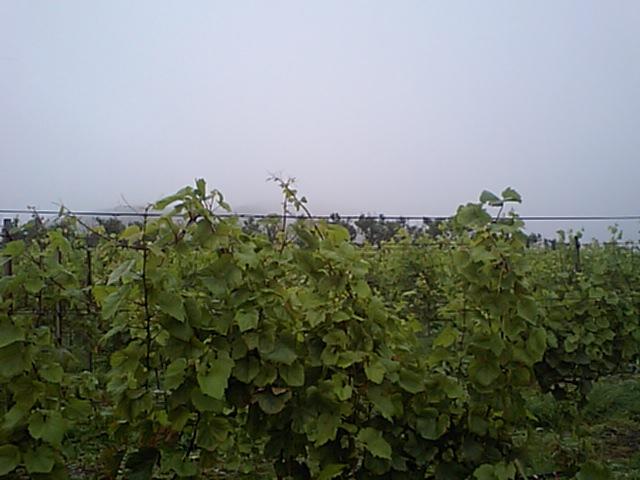 20080731-2.jpg